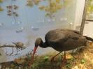 loodusmuuseum_12