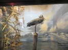 loodusmuuseum_2