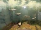 loodusmuuseum_3