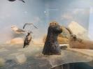 loodusmuuseum_4