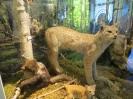 23.04.14  Loodusmuuseum